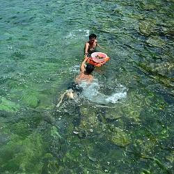 Tìm hải sản quý (Bào ngư)
